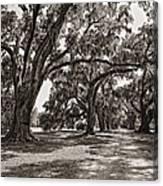 Memory Lane Monochrome Canvas Print