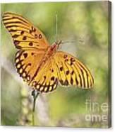Merritt Butterfly Canvas Print