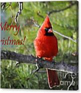 Merry Christmas Cardinal Canvas Print
