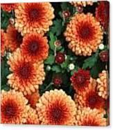 Merry Marigolds Canvas Print
