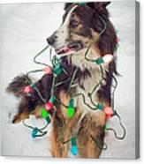 Merry Merry Bark Bark Canvas Print