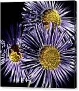 Metallic Daisies Canvas Print