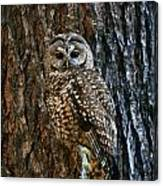 Mexican Spotted Owl Camouflaged Against Canvas Print