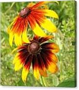 Mexican Sunflowers 2 Canvas Print