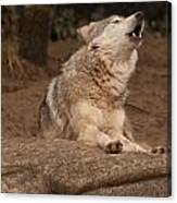 Mexican Wolf Howling Canvas Print