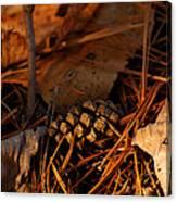 Michigan Golden Sunset Pine Cone Canvas Print