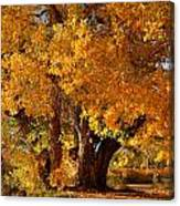 Mid-autumn Afternoon Canvas Print