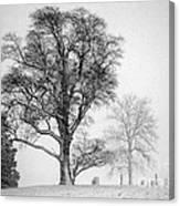 Mid Winter- Guardian Tree Canvas Print