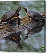 Midland Painted Turtles Canvas Print