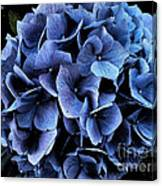 Midnight Hydrangea Canvas Print