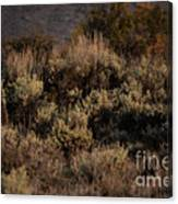 Midnight Sage Brush Canvas Print