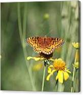 Migrating Butterfly Ser2 Canvas Print