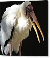 Milky Stork Canvas Print