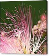 Mimosa And Worm Canvas Print