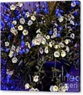 Mini Petunias Canvas Print