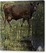 Mirrored Moos  Canvas Print