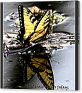 Missing You - Butterfly Canvas Print