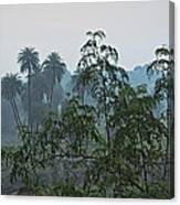 Mist Over Mhow Forest Canvas Print