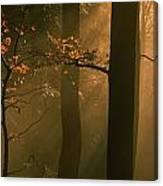 Misty Autumn Forest At Sunset Canvas Print