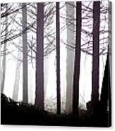 Misty Forest Canvas Print