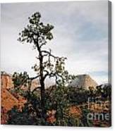 Misty Morning In Zion Canyon Canvas Print