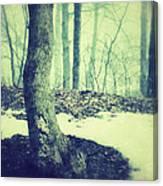 Misty Winter Woods Canvas Print