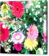 Mixed Asters Canvas Print