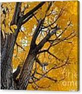 Moab Color Splash Canvas Print