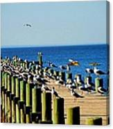 Mobile Bay Meeting Of The Minds Canvas Print