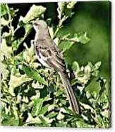 Mockingbird I Canvas Print