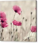 Summer Feelings For You Canvas Print