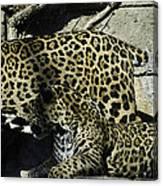 Mom And Baby Cheetah Canvas Print