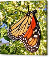 Monarch An Wildflowers Canvas Print