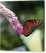 Monarch And Lavender Canvas Print