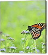 Monarch And Mist Canvas Print