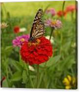 Monarch And Red Zinnia 2009 Canvas Print