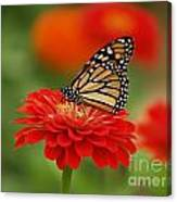 Monarch And Red Zinnia Canvas Print