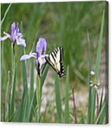 Monarch Butterfly On Iris Ser2 Canvas Print
