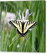 Butterfly On Iris Ser3 Canvas Print