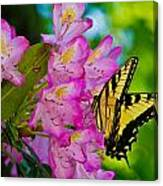 Monarch Of Blowing Rock Canvas Print