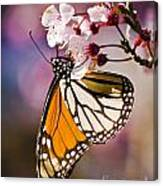 Monarch On A Flower Canvas Print
