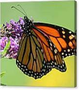Monarch On Green Canvas Print