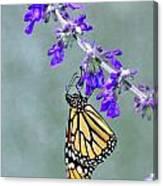 Monarch On Purple Canvas Print