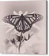 Monarch On Sunflower Canvas Print
