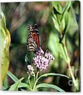 Monarch On The Wild Flowers Canvas Print