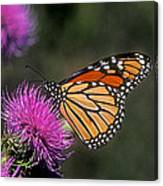 Monarch On Thistle 13f Canvas Print