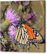 Monarch On Thistle II Canvas Print