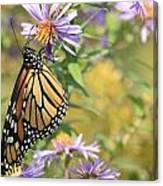 Monarch profile one Canvas Print