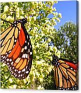 Monarch Rest I Canvas Print