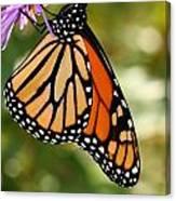 Monarch Rest Canvas Print